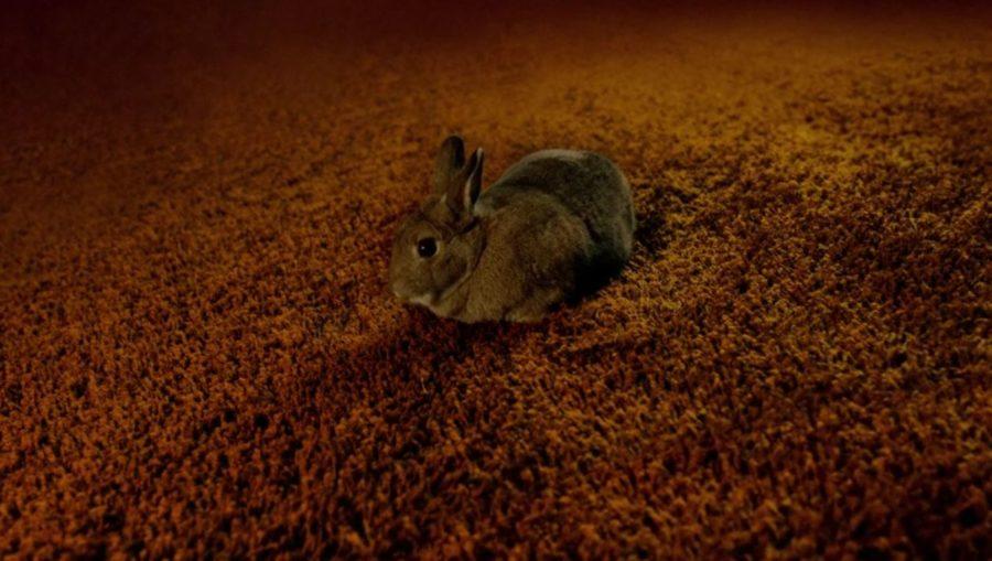 outlander easter eggs, rabbit in outlander